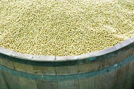A soja é o principal item exportado pelo Brasil. Segundo dados da Conab, de janeiro a novembro de 2013, o produto teve uma participação de 13,7% nas exportações brasileiras
