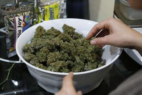 Empresa de mariguana medicinal inicia operaciones en Monterrey