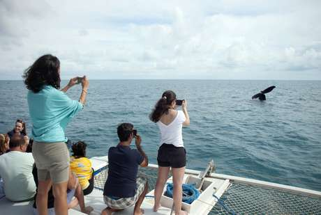 Abrolhos, na Bahia, reúne turistas que querem ver de perto as baleias