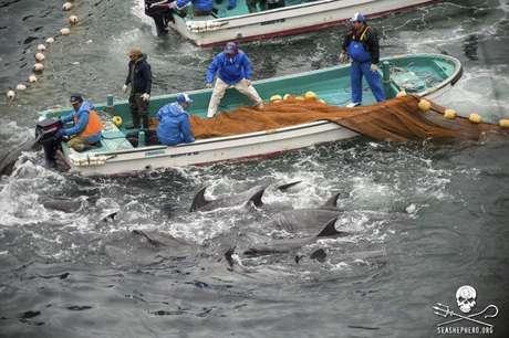 Pescadores japoneses caçam golfinhos em Taiji, na segunda-feira