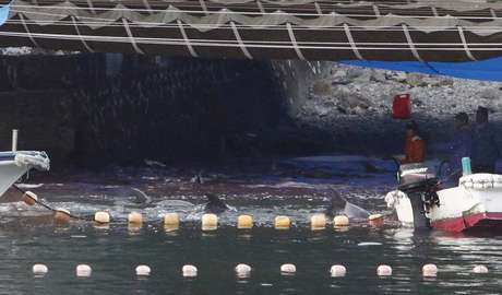 <p>Japoneses come&ccedil;aram a matar alguns dos golfinhos capturados em Taiji nesta ter&ccedil;a-feira</p>