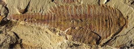 Fóssil encontrado tem 520 milhões de anos