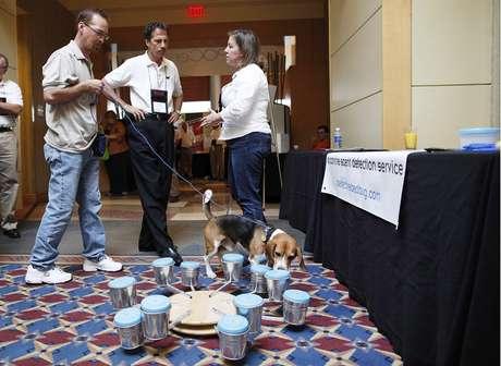 Os cachorros treinados podem sentir a presença do câncer em exames de urina simples