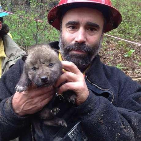 <p>Bombeiro mostra um dos 5 filhotes de lobo encontrados em uma reserva do Alasca</p>