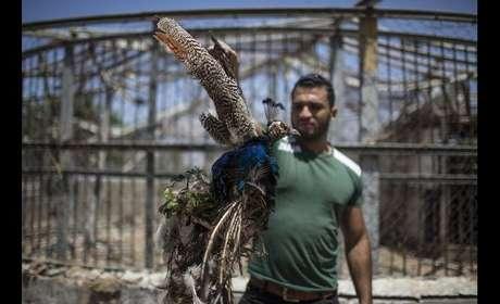 Funcionários do zoológico mostra pavão morto em meio aos ataques israelenses em Gaza