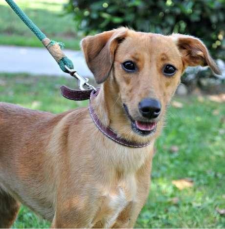 <p>Mirtilla é uma das cachorrinhas disponíveis para adoção no aplicativo da cidade</p>