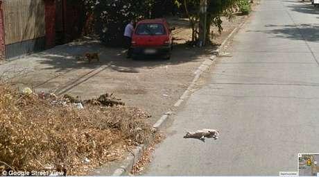 <p>Animal é visto caído na rua depois que o carro da empresa passa</p>