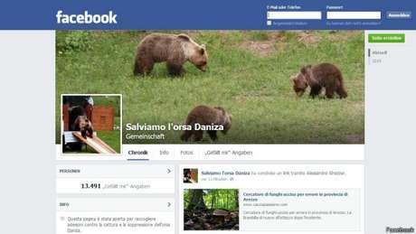 <p>Ativistas criticam autoridades italianas pela tentativa de separar ursa de seus filhotes</p>