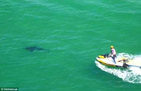 <p>Tubar&atilde;o branco que atacou Paul&nbsp;foi visto na praia australiana (em imagem)</p>