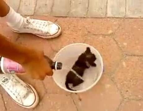 <p>Antes de incendiar o gato, os dois jovens molharam o animal com gasolina</p>