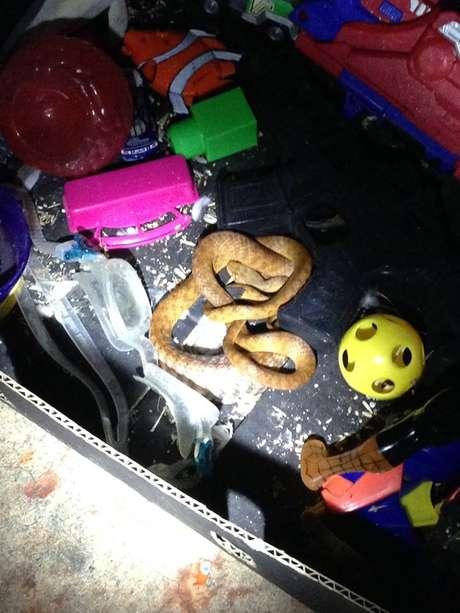 <p>Outra cobra foi aprrendida após ser localizada dentro de uma caixa de brinquedos em agosto</p>
