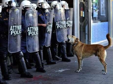 <p>O cachorro se tornou s&iacute;mbolo das greves que atingiram a Gr&eacute;cia durante a crise</p>