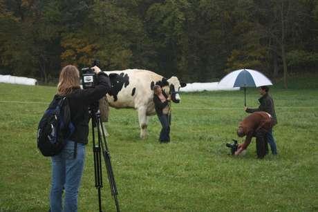 A vaca tem 1,93 metros e é a mais alta do mundo