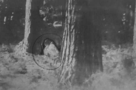 A imagem tirada pelo casal revelaria o fantasma em um parque da cidade