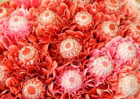 O tratamento com flor de awapuhi tem alto poder de reparação dos fios e selagem da cutícula