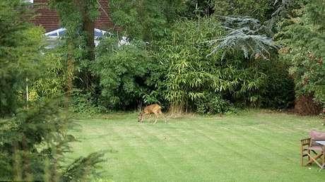 <p>A carcaça foi encontrada no interior do jardim que fica no quintal de John Griffin, um morador da região</p>