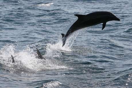 Golfinhos podem morrer de hipotermia e fome se não comem o suficiente e queimam muita gordura