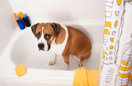 Para reduzir gastos de água, muitos donos estão levando seus animais ao pet shop com menos frequência
