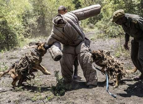 Cães farejam e encontram caçadores de rinocerontes em mata na África do Sul