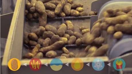 Três tipos de batatas são usadas na empresa
