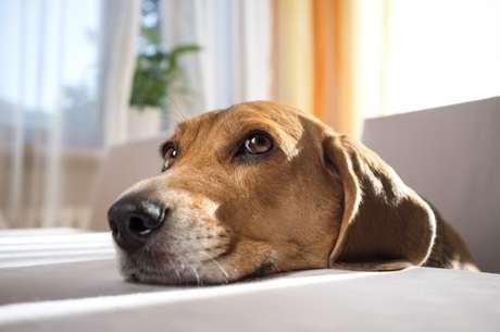 """<p>Cães percebem que são """"enganados"""" e tentam não seguir gestos de comandos errados anteriormente, segundo estudo</p>"""