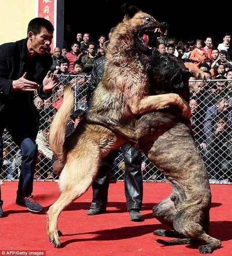 Imagens de briga entre cães no Festival de Primavera da cidade de Sanjiao, na província de Jishan, causam revolta