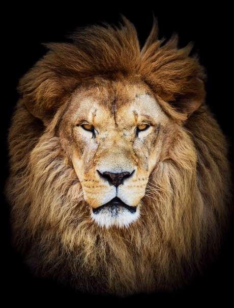 Entre março e abril, é hora de os brasileiros acertarem as contas com o leão