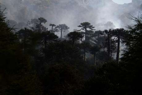 Los incendios de la Reserva Nacional China Muerta, Parque Nacional Conguillio, y Reserva Malleco estarían controlados.