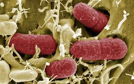 Governo britânico alerta sobre risco de surto por superbactéria