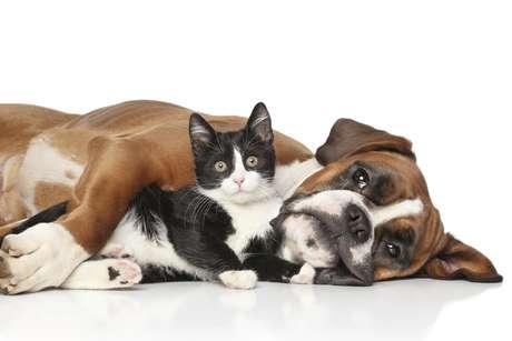 Albarración propulsó la Ley Nacional de Protección de los Animales.