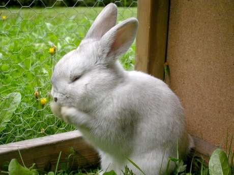 Resultado de imagen de un conejo en la estación