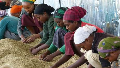Levado para colônias, café é produzido em climas tropicais