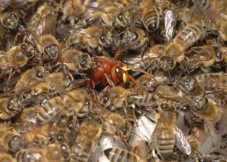 Una abeja en su cerveza lo mata