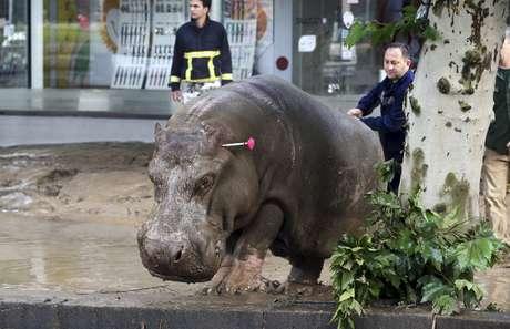 Homem acerta dardo em hipopótamo que fugiu do zoológico