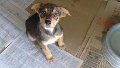 Programa de pet fala sobre a adoção de cães de rua e terá como convidado o recém-nascido vira-latas Yuri, nesta quarta-feira (24)
