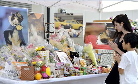 Cerca de 3 mil pessoas vão a funeral da gata Tama no Japão