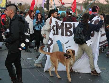 Cachorros vivem soltos em Santiago: capital chilena é a capital dos cães sem dono pelo mundo. Mas, em geral, eles são simpáticos