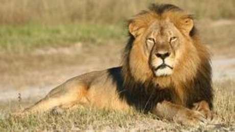 Leão Cecil foi morto por dentista americano em julho