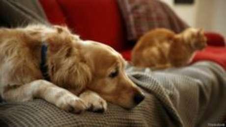 Há sinais para identificar possíves problemas psicológicos nos animais