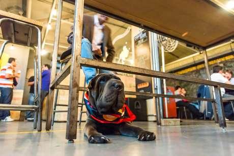No BrewDog Bar os cachorros não apenas podem entrar no estabelecimento, como têm a opção de beber uma cerveja canina