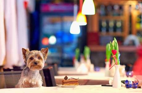 Existem desde espaços onde os animais podem ficar nas áreas externas até aqueles que servem os mesmos pratos para os donos e seus cachorros