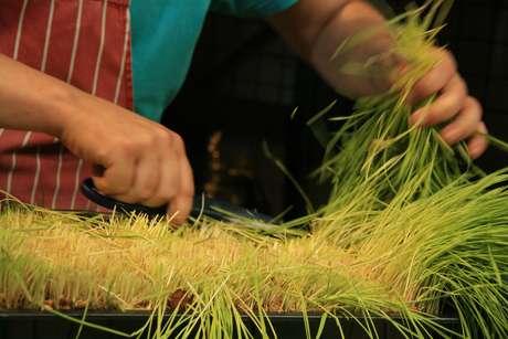 As feiras livres favorecem os pequenos agricultores e contribuem para a manutenção da produção de produtos artesanais