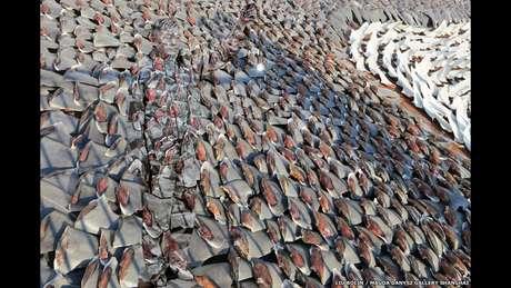 """Em um novo projeto, o artista chinês invadiu sites institucionais de diversos países, como o da embaixada francesa em Londres, e alterou algumas imagens, substituindo as originais por versões reconstruídas por ele, em que fica """"escondido"""" por meio da ilusão de ótica"""