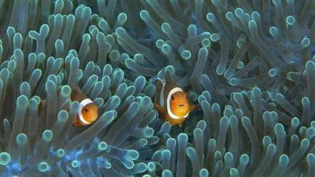 Anêmonas-do-mar são facilmente avistadas no litoral de muitas cidades