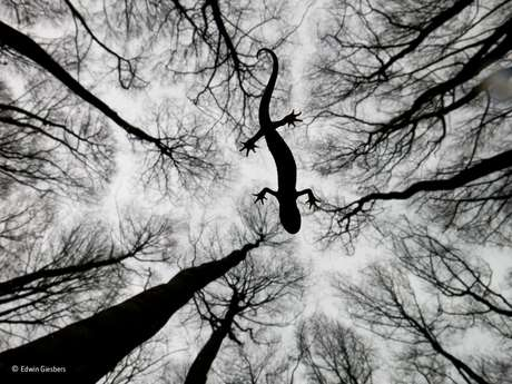"""Mais de 42 mil fotos foram enviadas de 96 países para competir em 18 categorias. Este clique de Edwin Giesbers de um tritão-de-crista na superfície de um rio foi a ganhadora na categoria """"Anfíbios e Répteis""""."""