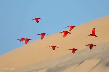 Encontradas na natureza, com foco no comportamento de animais ou em paisagens. Jonathan Jagot venceu a categoria para fotógrafos com idades entre 15 e 17 anos com esta  bela imagem de guarás sobrevoando os Lençóis Maranhenses, no Brasil.