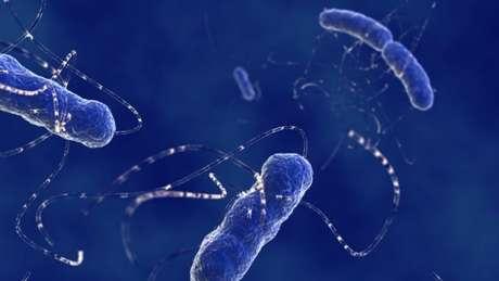 A resistência já se espalhou por várias cepas e espécies de bactérias, como a E. coli