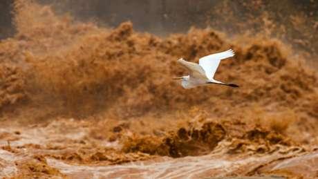 Garça voando em frente à barragem de Mascarenhas, no momento em que a lama de resíduos atingia o rio