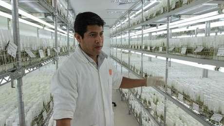 Laboratórios da CIP têm amostras de mais de 4 mil tipos de batata