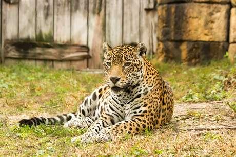Zoológio conta com mais de 2 mil espécies